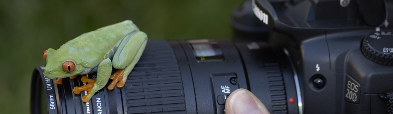 WLC – frog and camera